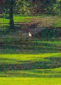 Gleneagles Country Club